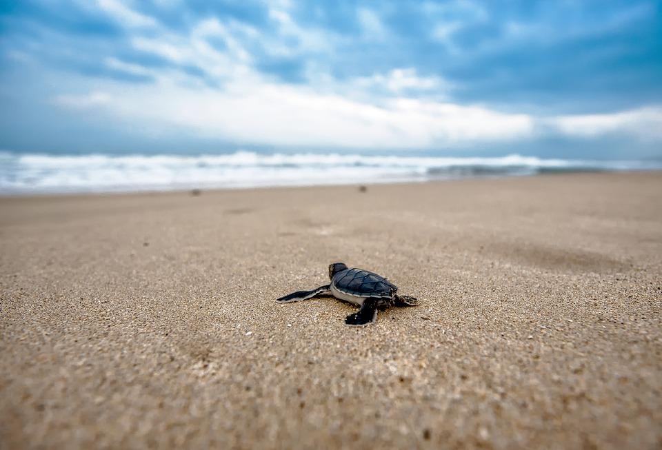 turtle-2201433_960_720.jpg