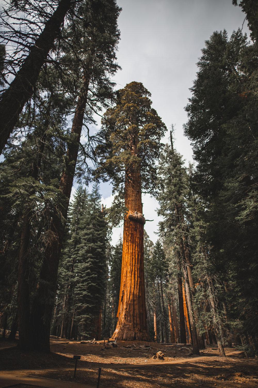 2018-05-20 Sequoia-4.jpg