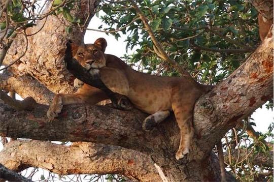 Lion Tree2.jpg
