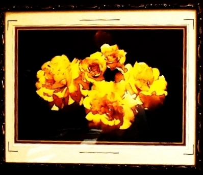 Picture of yellow flowers with black background