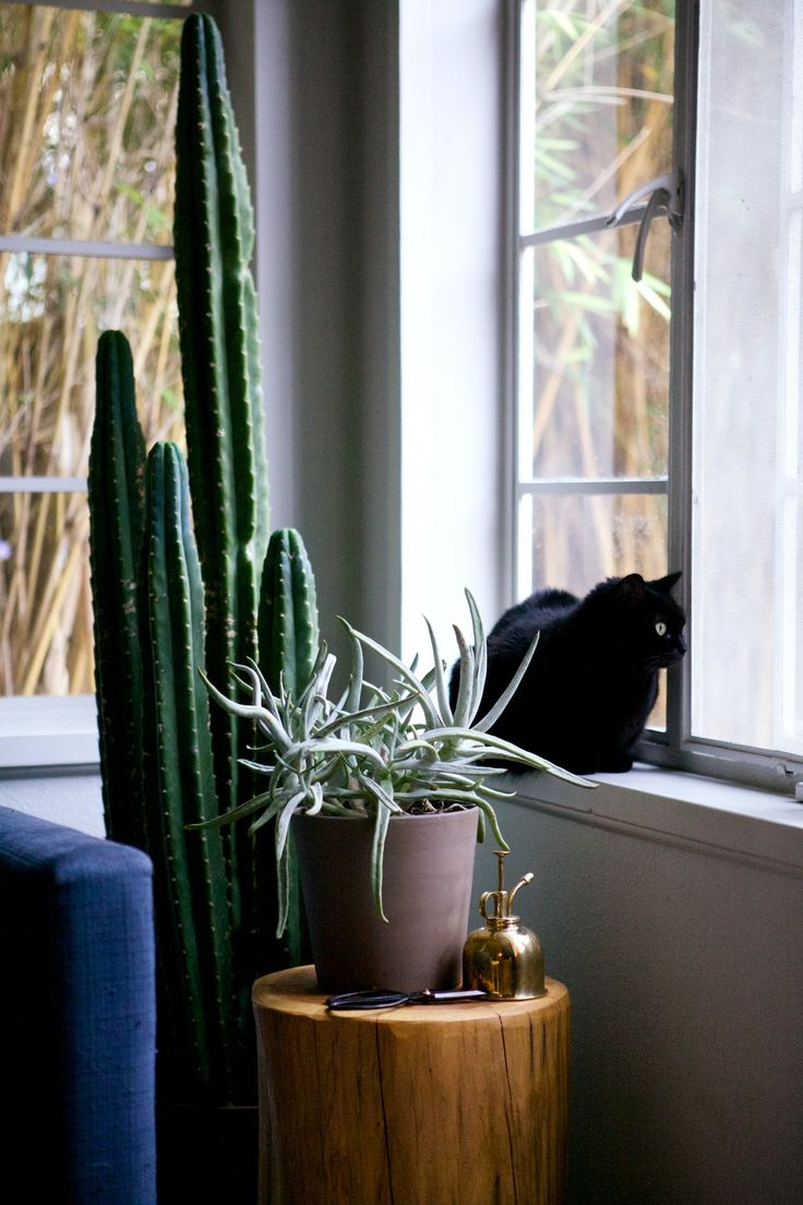 kitty + cacti