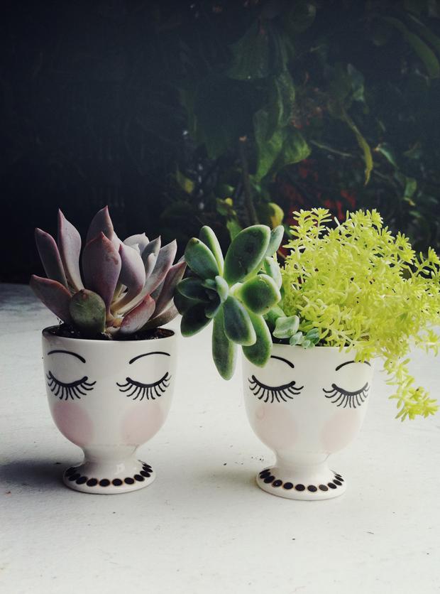 egg-cups-succulents