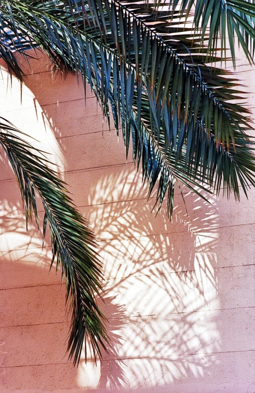 pink and palms