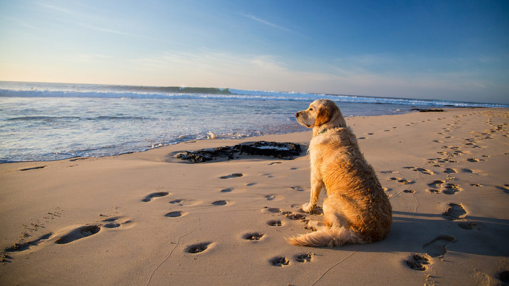 best beach date ideas sydney pet friendly