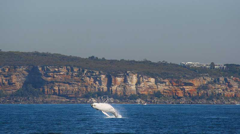 Whale-Watching-North-Head---Spark-Date-Night-Ideas.jpg