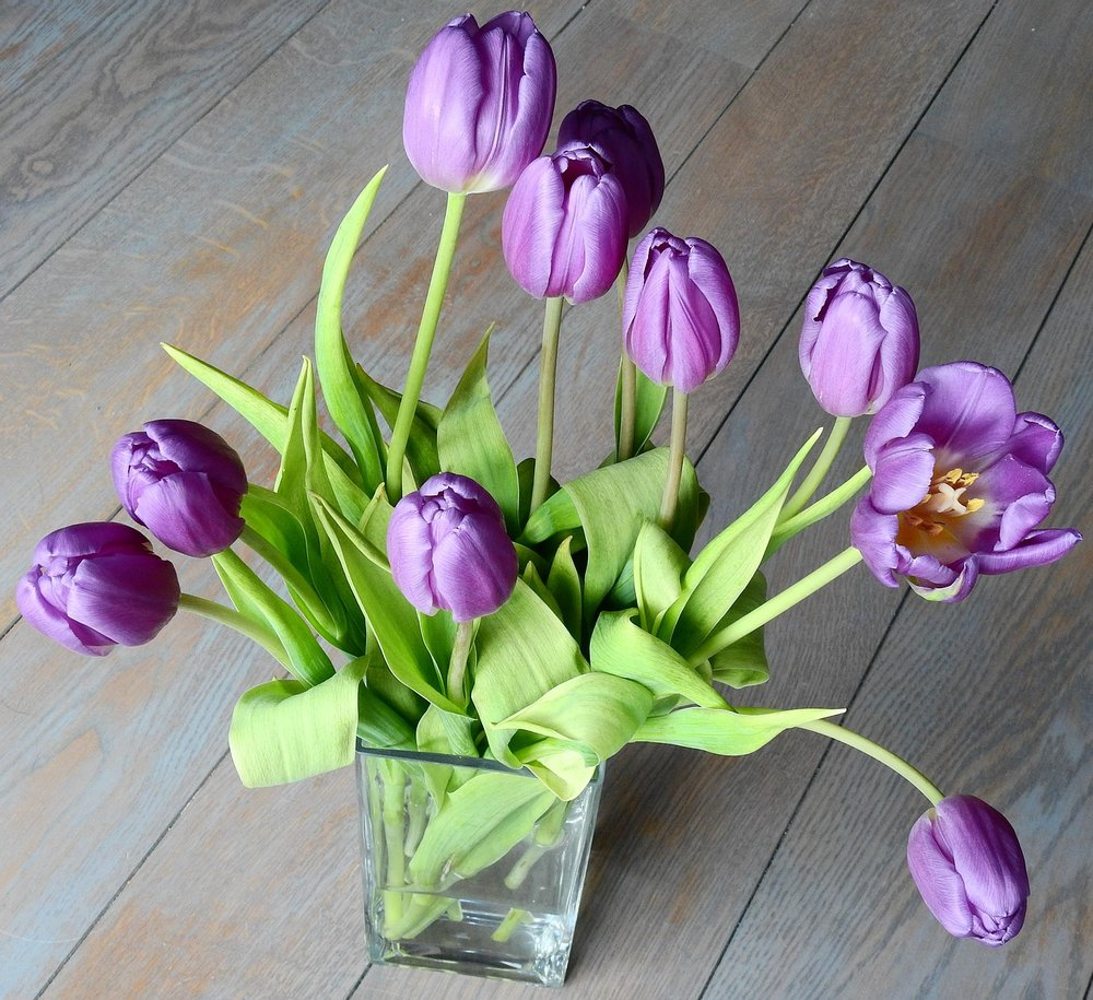 tulip-3273757_1280.jpg