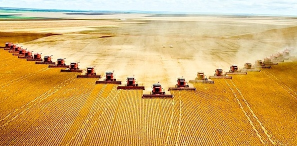 Monocropping devastates ecosystems by forcing the land to gro only one thing for miles and miles. This is the face of modern conventional agriculture.