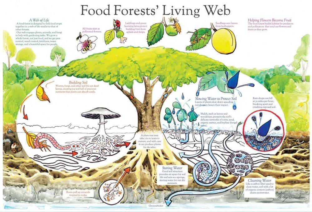 Food-Forest-Living-Web-1170x797.jpg