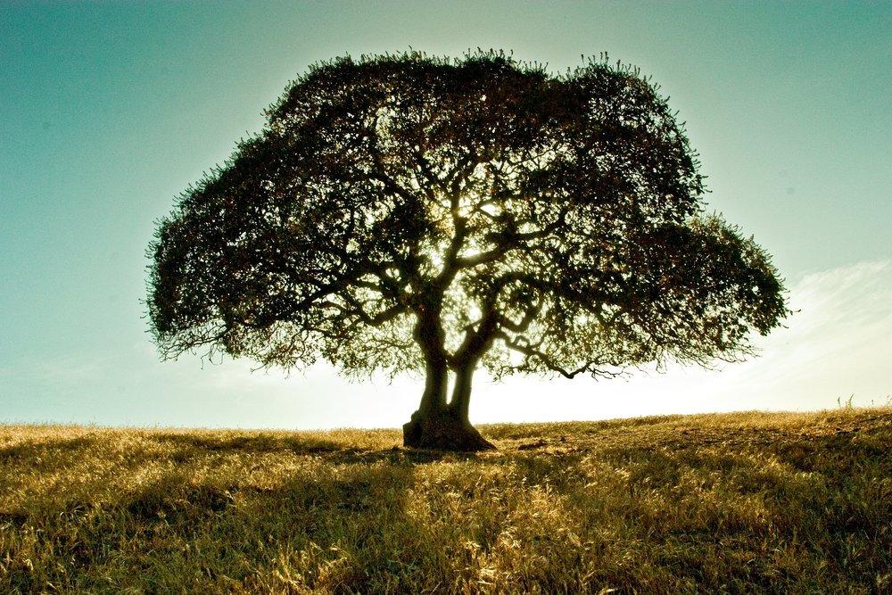 tree-696839_1920.jpg