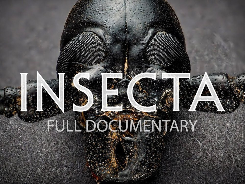 insecta-documentary-screenshot.jpg