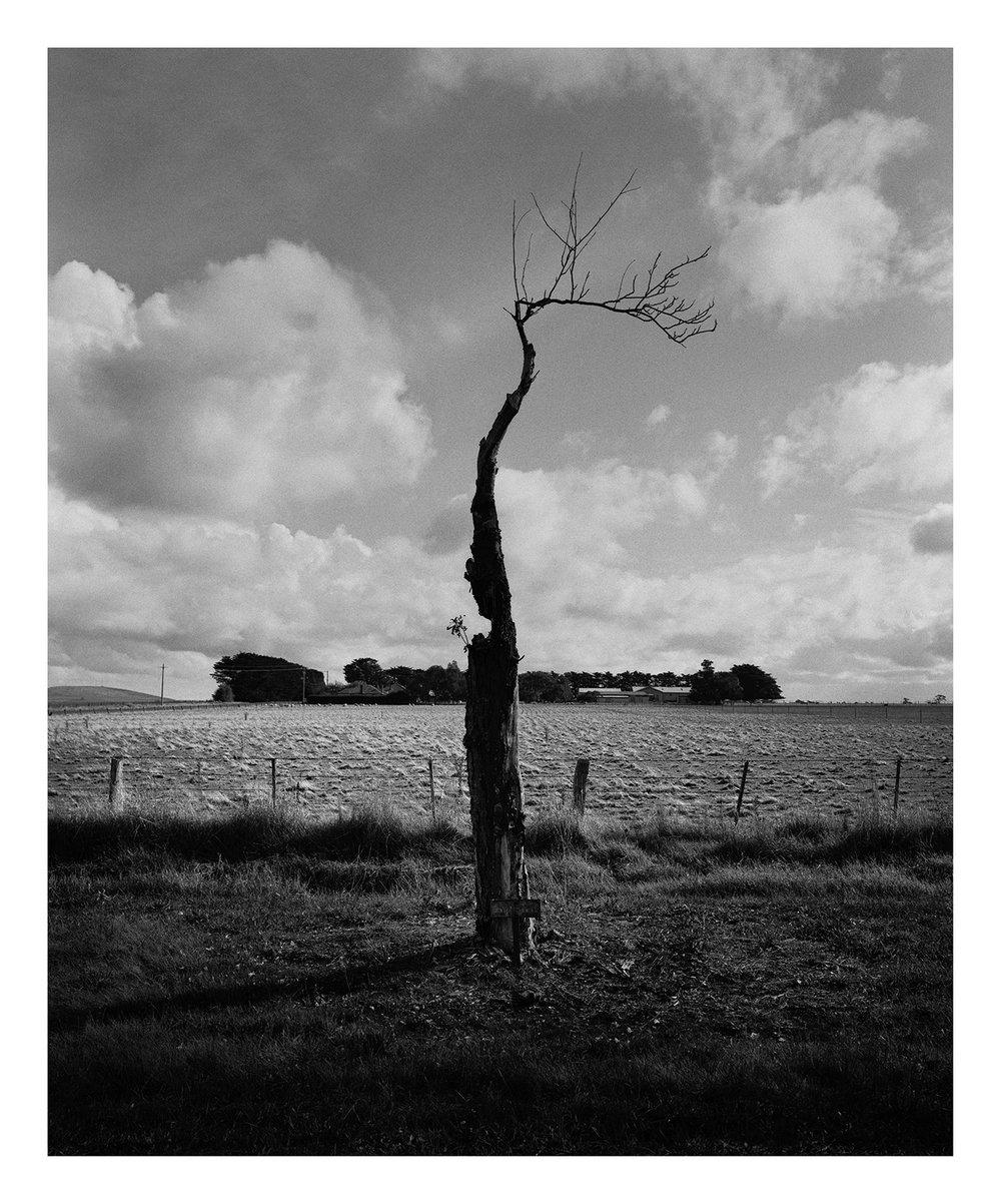 Tree 3375 Bergin.jpg