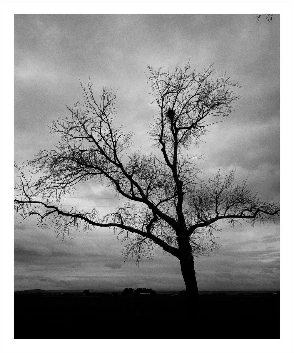 Tree 3400 Wills.jpg