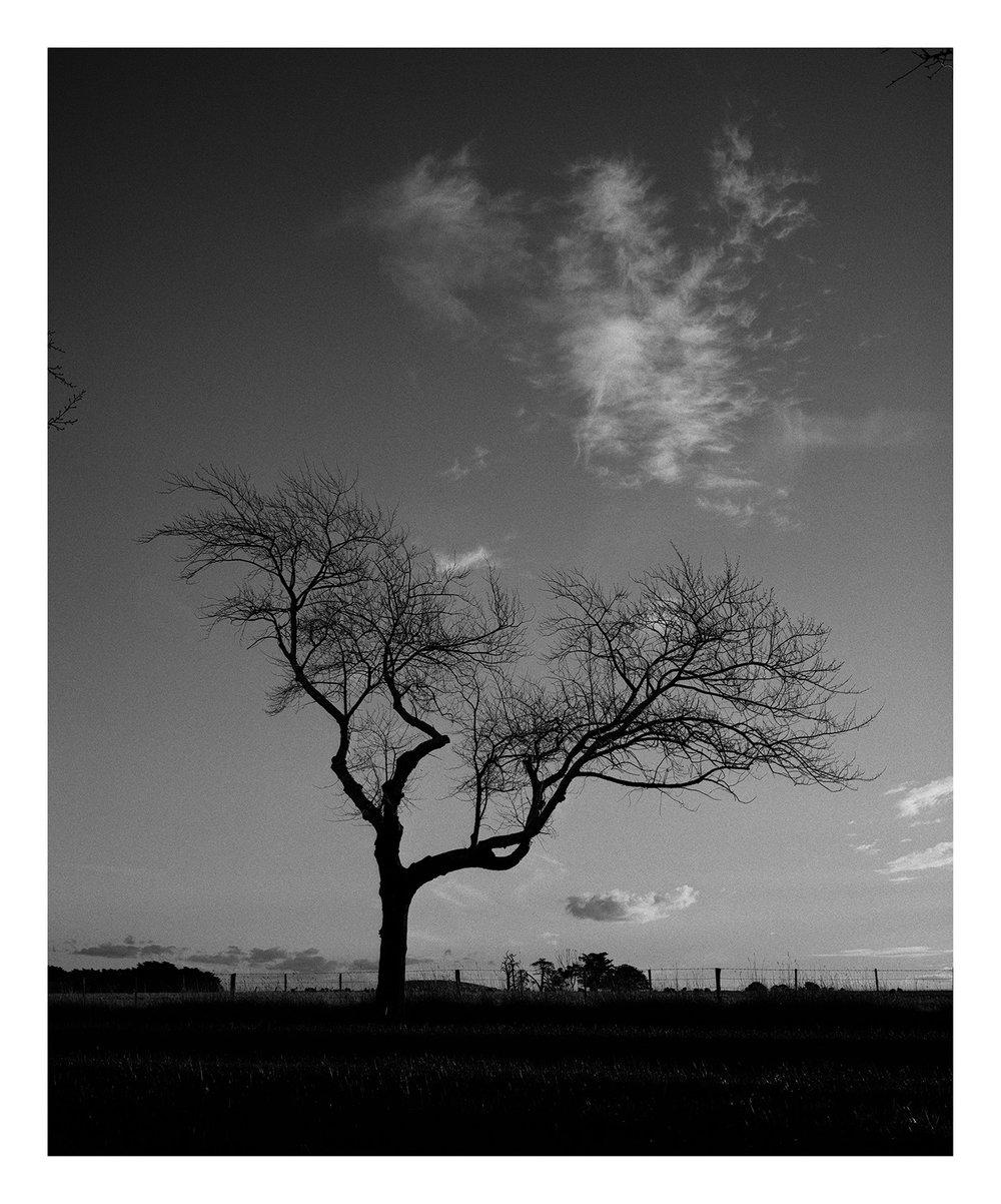 Tree 3445 Drury.jpg