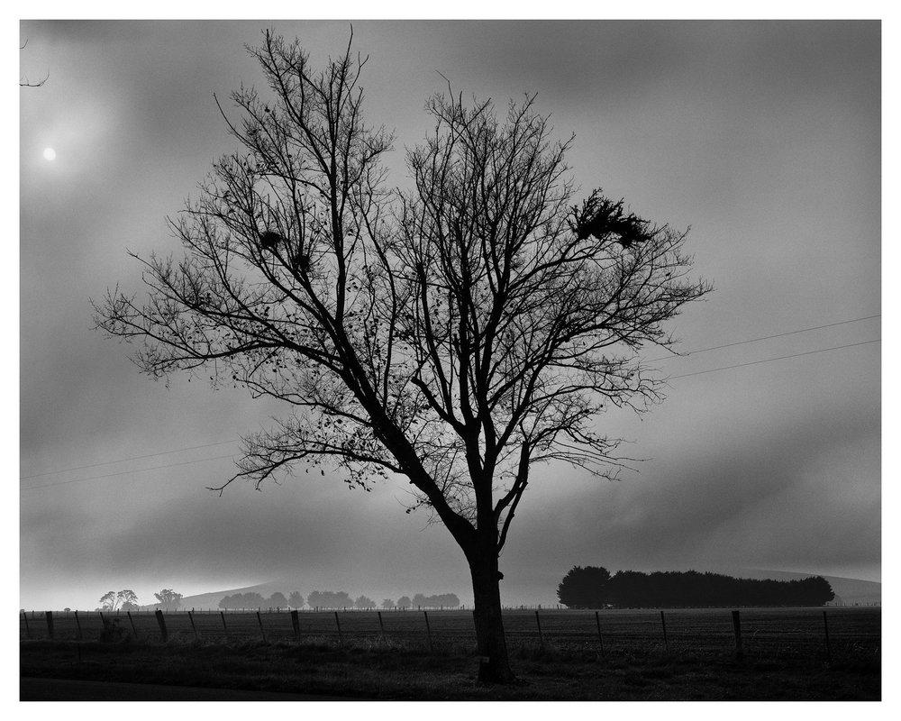 Tree 3406 Gregan.jpg