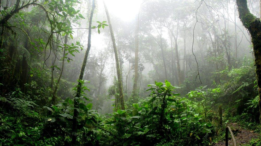 amazon-branches-dawn-975771.jpg