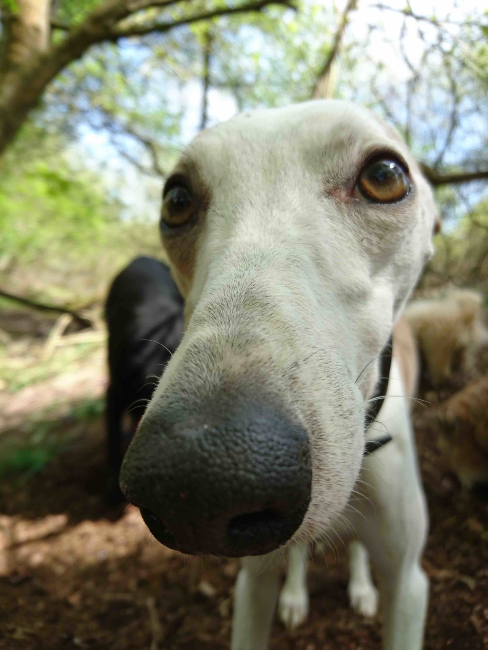 Your puppy or dog needs regular socialisation and our dog walking services in the North Oxford area are reliable, fun and affordable.