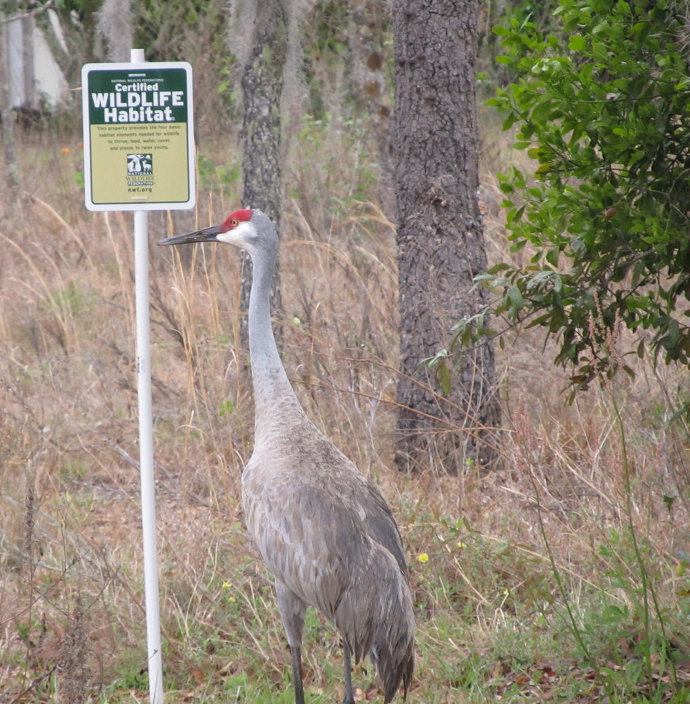"""A bird in front of a """"Certified WILDLIFE Habitat"""" sign"""