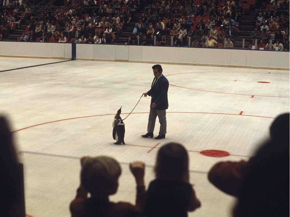 peter-schepis-parades-pittsburgh-penguins-mascot-penguin-pe.jpg