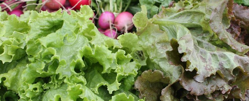 860x350_vegetables.jpg