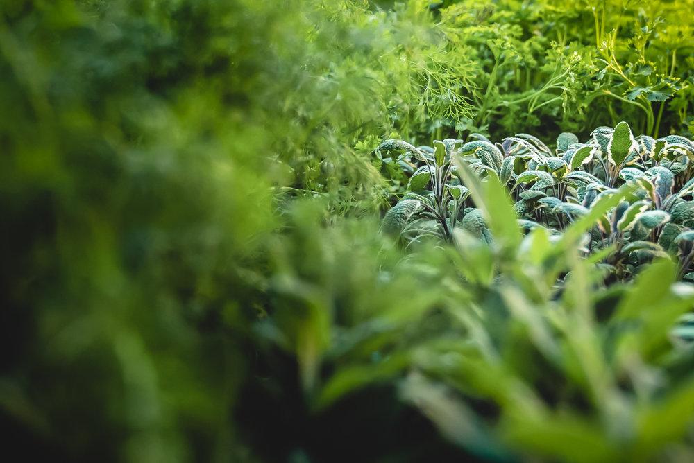 ElyseesEye-Greens-1.jpg