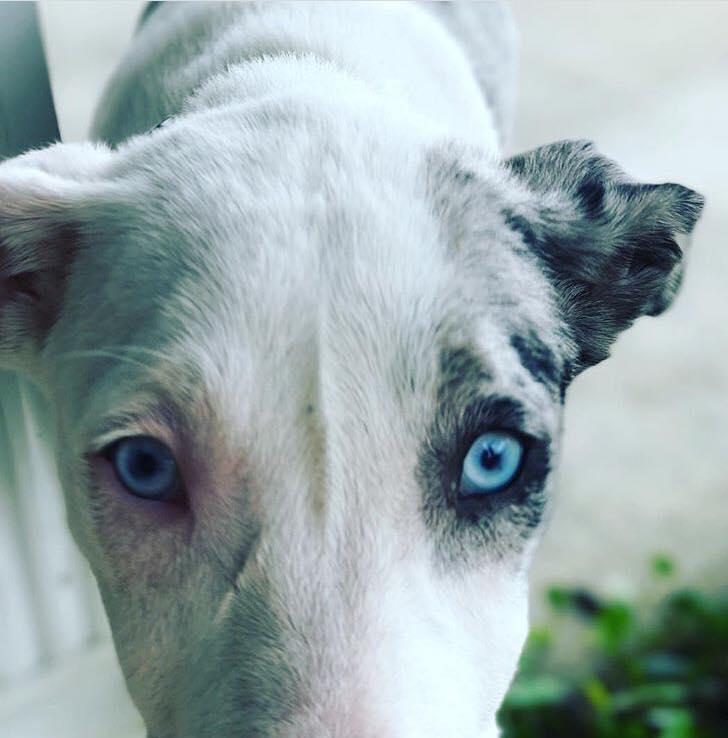 Oooo wee, those eyes!