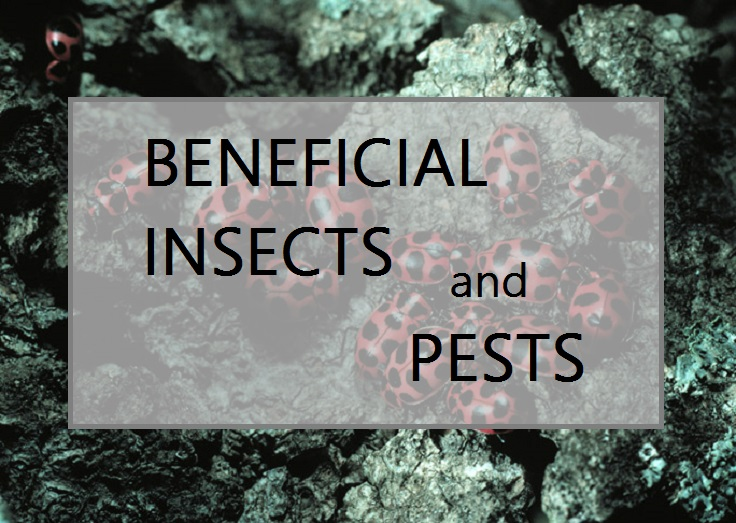 BENEFICAIL INSECTS2.jpg