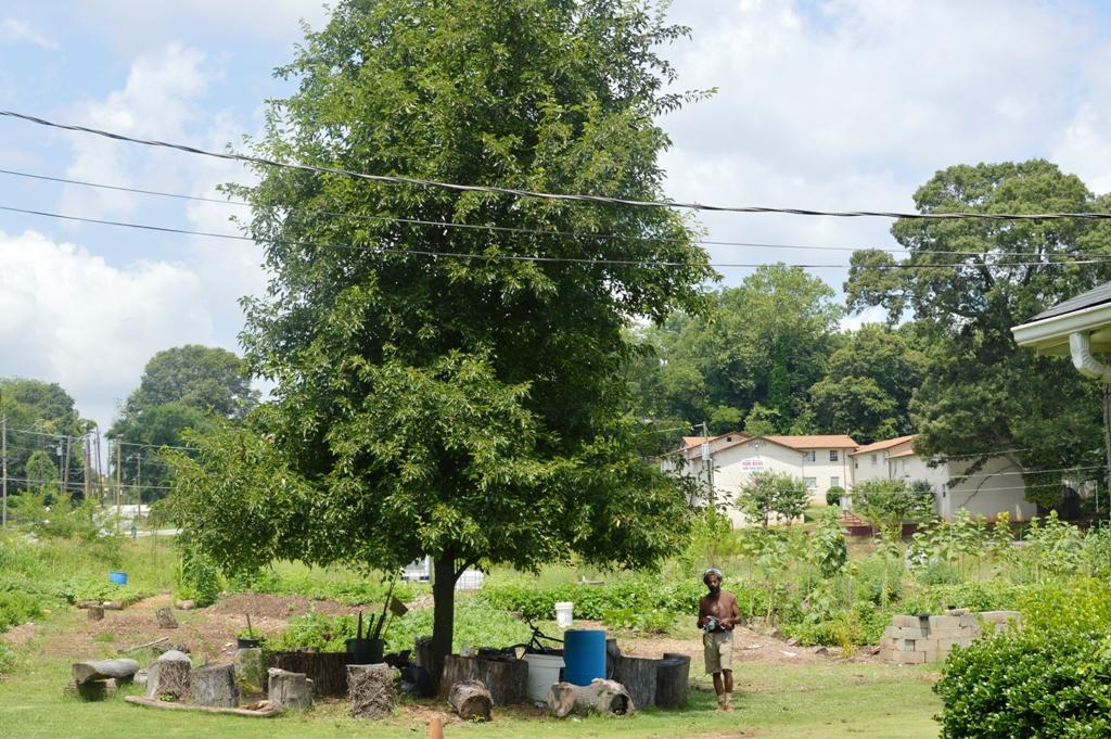 Good Shepard Community Farm - Atlanta - The City Dweller (1)