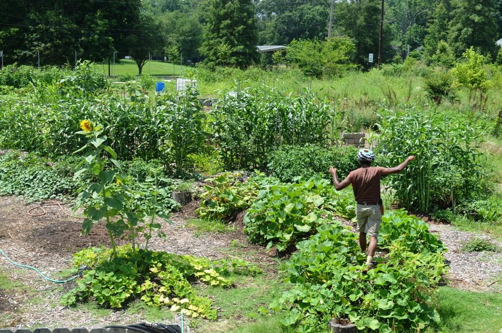 Good Shepard Community Farm - Atlanta - The City Dweller (11)
