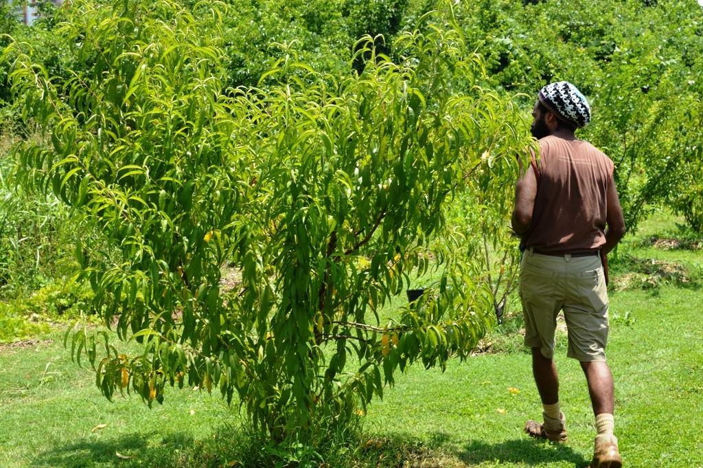 Good Shepard Community Farm - Atlanta - The City Dweller (17)