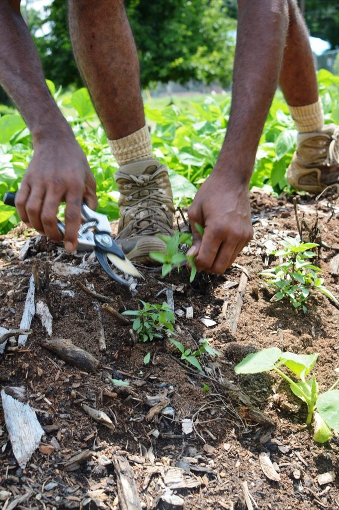 Good Shepard Community Farm - Atlanta - The City Dweller (29)