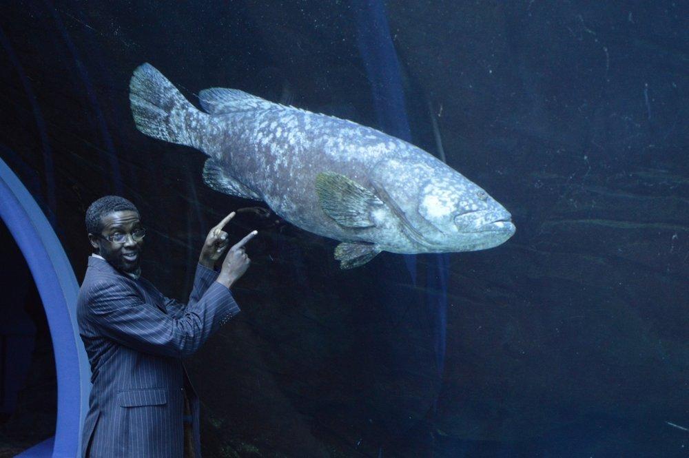 Sips Under the Sea - Georgia Aquarium - Atlanta - The City Dweller (19)