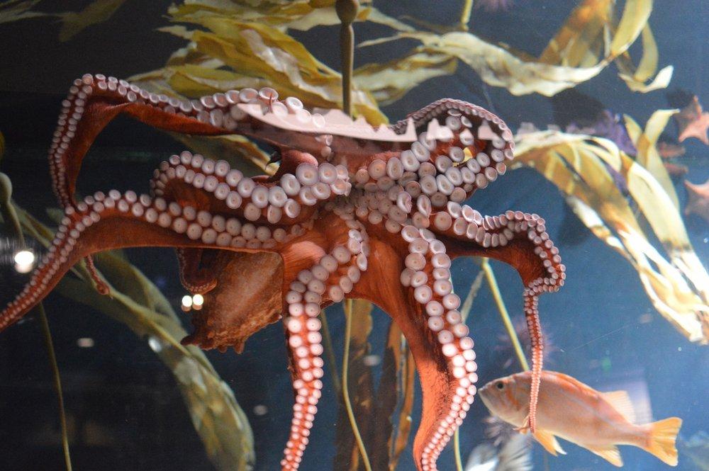 Sips Under the Sea - Georgia Aquarium - Atlanta - The City Dweller (2)