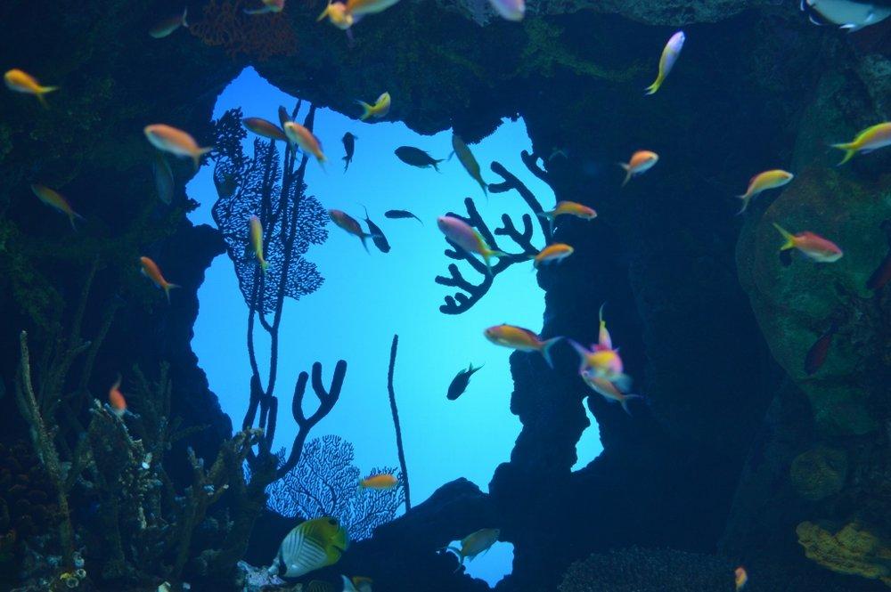 Sips Under the Sea - Georgia Aquarium - Atlanta - The City Dweller (20)