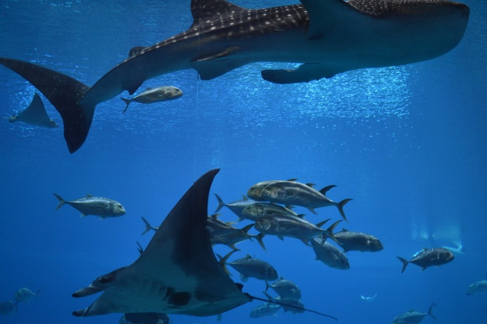 Sips Under the Sea - Georgia Aquarium - Atlanta - The City Dweller (28)
