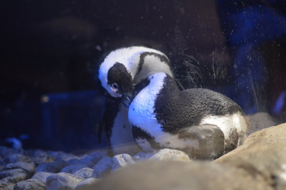 Sips Under the Sea - Georgia Aquarium - Atlanta - The City Dweller (32)