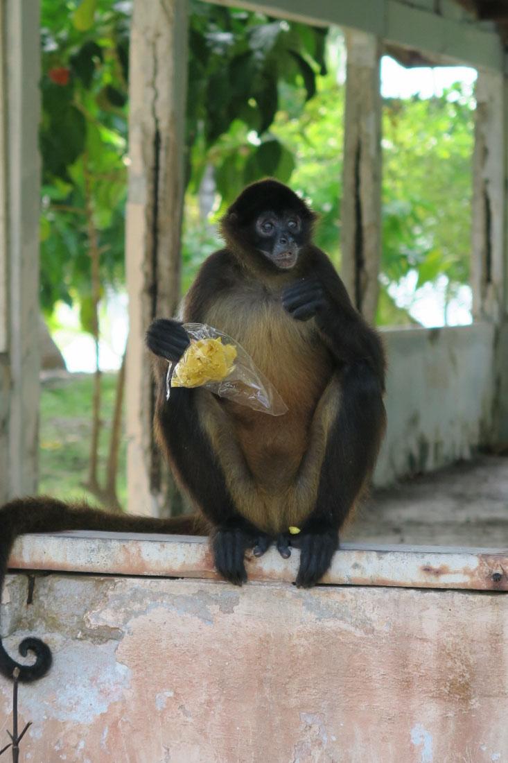 Panama - The City Dweller (79)