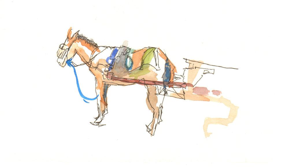 Donkey (1).jpg
