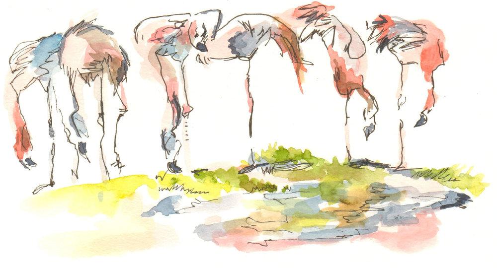 Flamingos (2) (3).jpg
