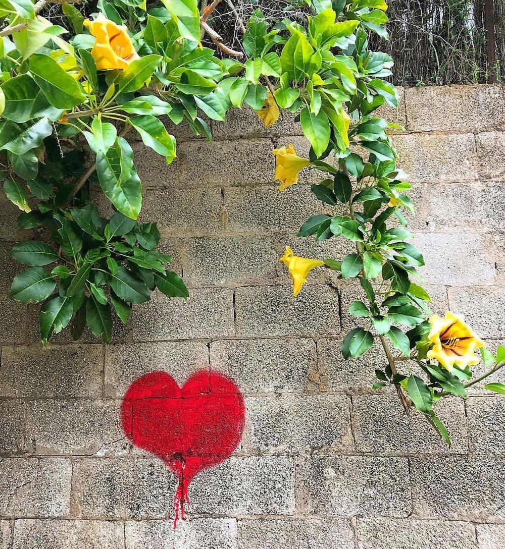 Trumpet vines always tug at my heart.  -  #spain #mallorca #flowers #trumpetflower  (at Deyá, Islas Baleares, Spain)