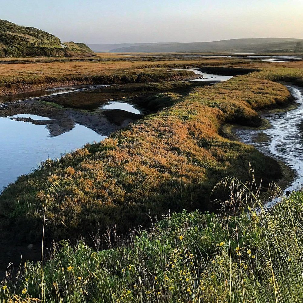 Last light on the marsh.  -  #california #mayday #ilovecalifornia #marsh  (at Point Reyes National Seashore)