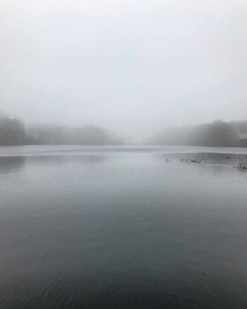 Fog.  -  #massachusetts #capecod #wintermedicine  (at Osterville, Massachusetts)
