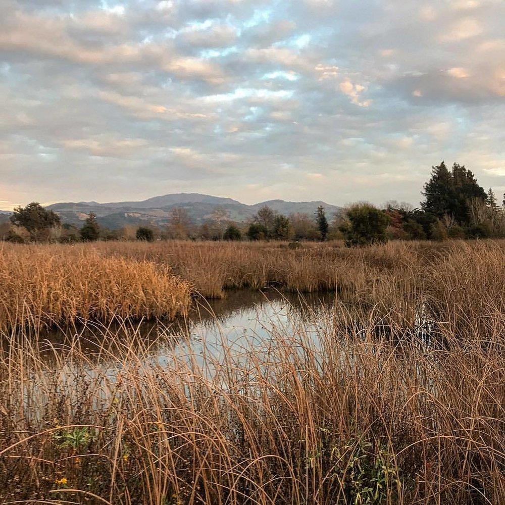 Marsh.  -  #reclaimedwetlands #eveningwalk #birdparadise  (at Napa River Trail)