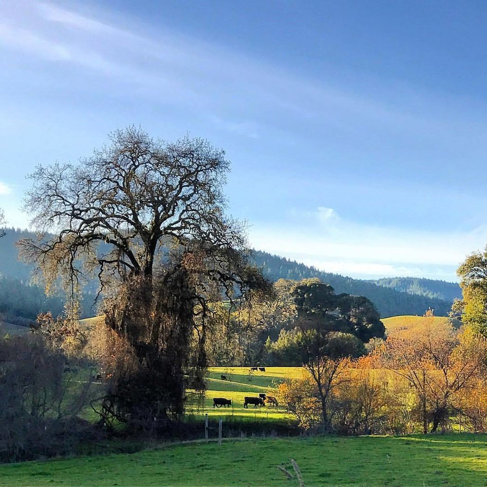Winter afternoon in Anderson Valley.  -  #california #ilovecalifornia #nature #offthebeatenpath  (at Boonville, California)