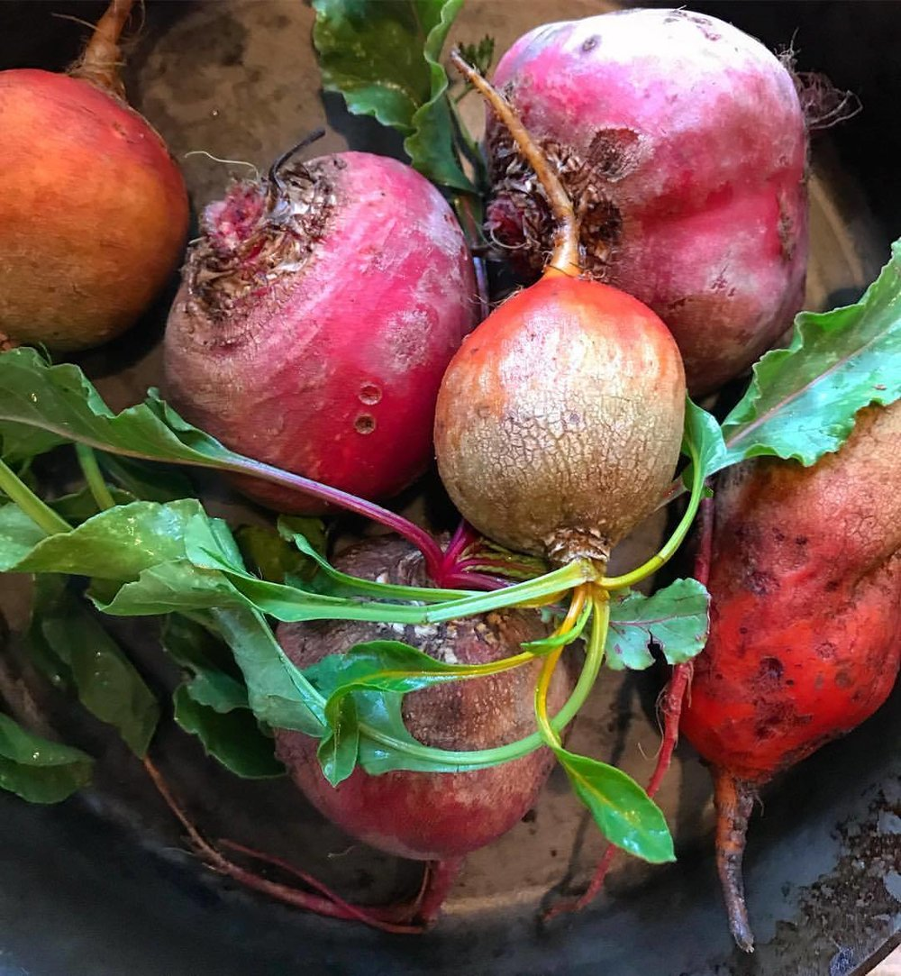 Beets for roasting,  buried in coals  until blackened  like an amateur's marshmallow  at summer camp.  Peeled, sliced thin   and given a wallop   of horseradish crème fraîche  to balance their inherent   sweetness.  -  #vegetables #beet #woodfired #rootveggies  (at At Home in Napa)