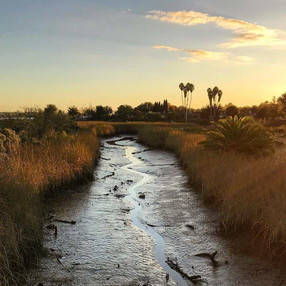 Low tide.  -  #california #ilovecalifornia #napavalley #eveningwalk  (at Napa River Trail)