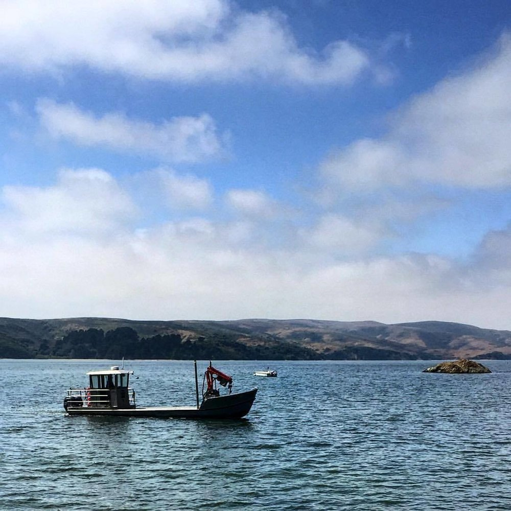 Oysterman.  #california #westmarin #hogisland  (at Marshall, California)