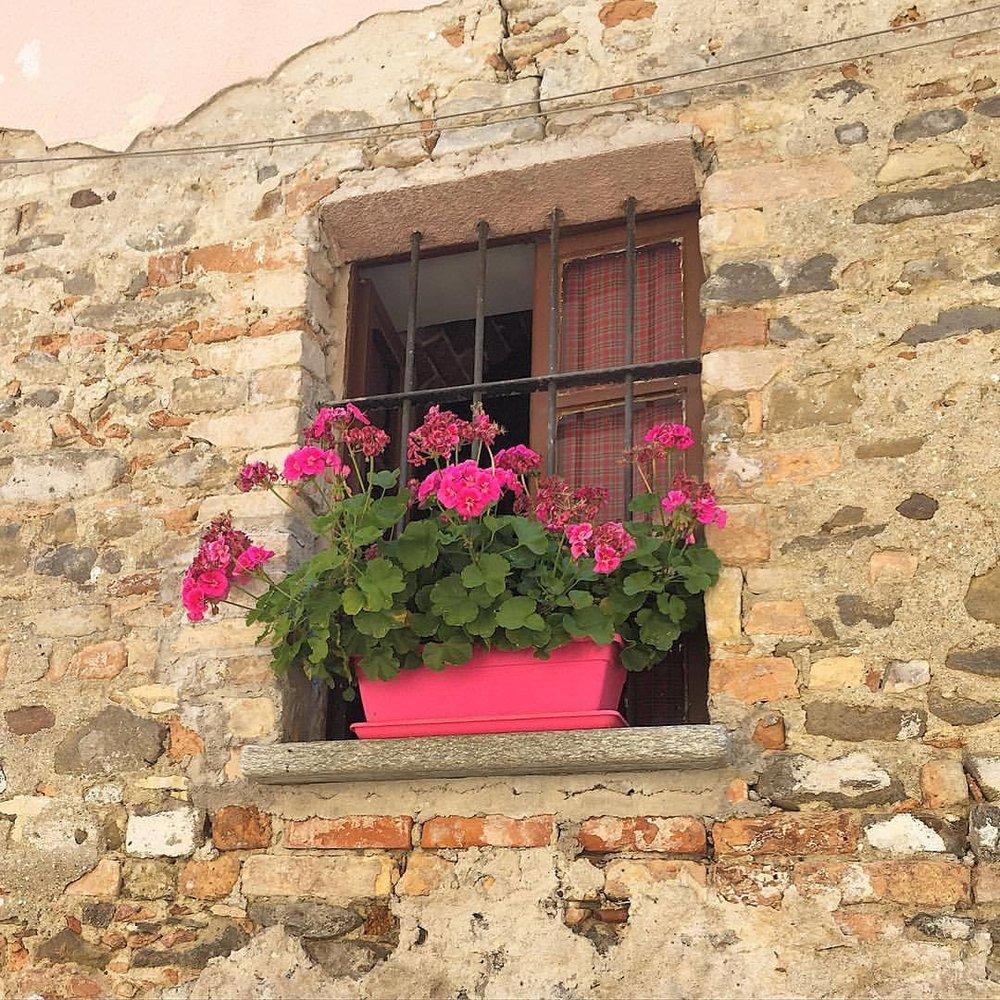 Barolo.  #italy #piedmont #geranium  (at Barolo, Piedmont)
