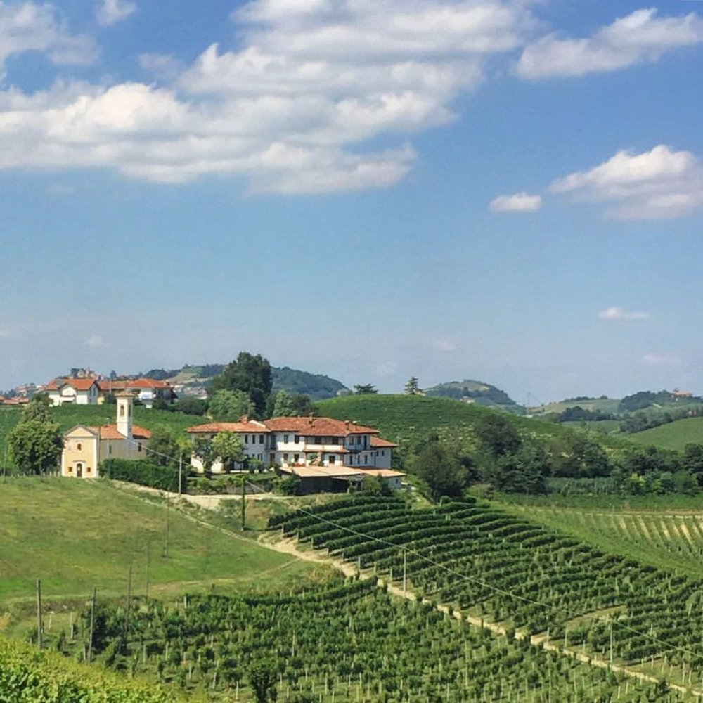 Dolcetto vineyards.  #italy #piedmont #vineyard  (at Castello di Serralunga d'Alba)