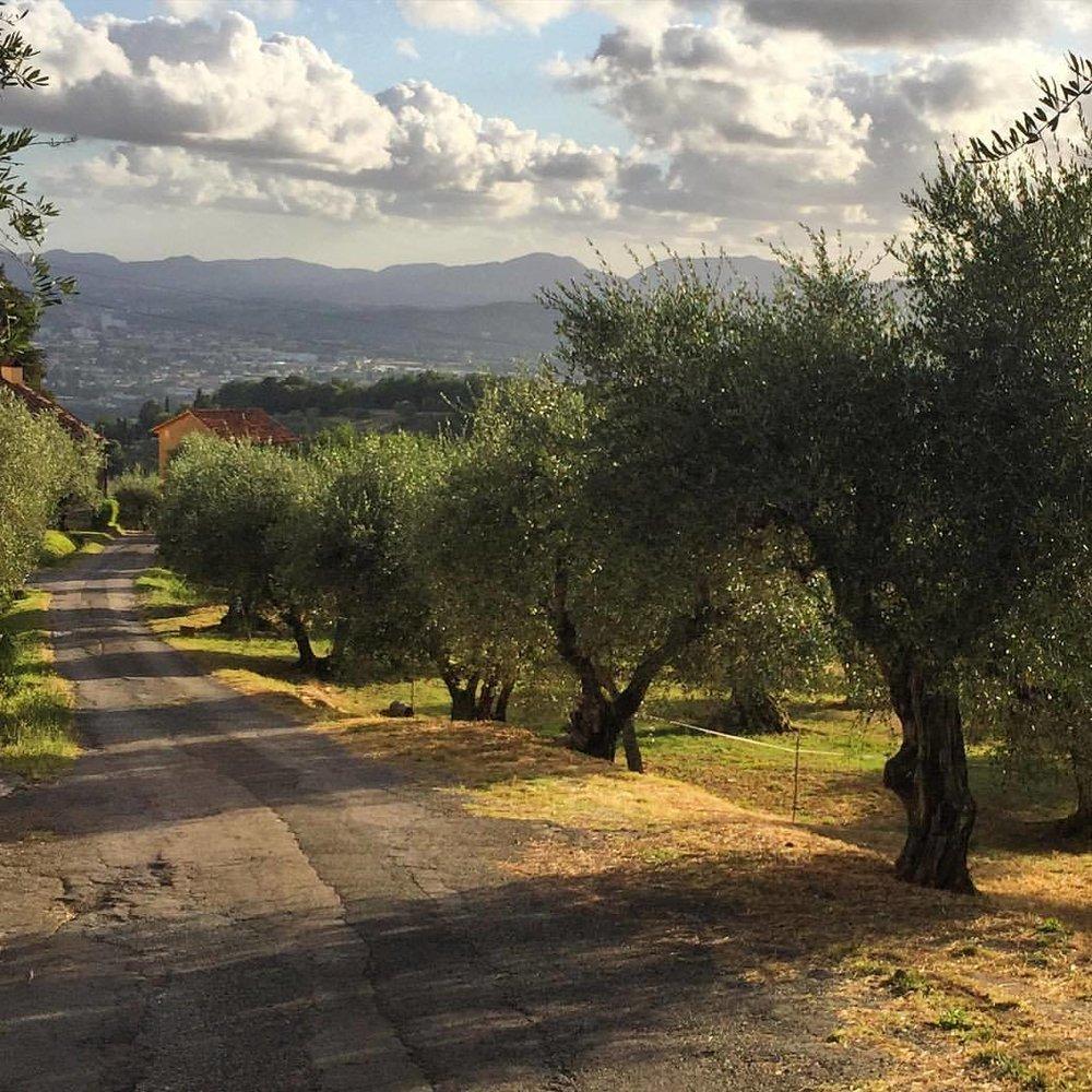 Tuscany.  #italy #tuscany #oliveoil #evoo  (at Tenuta San Pietro Lucca)