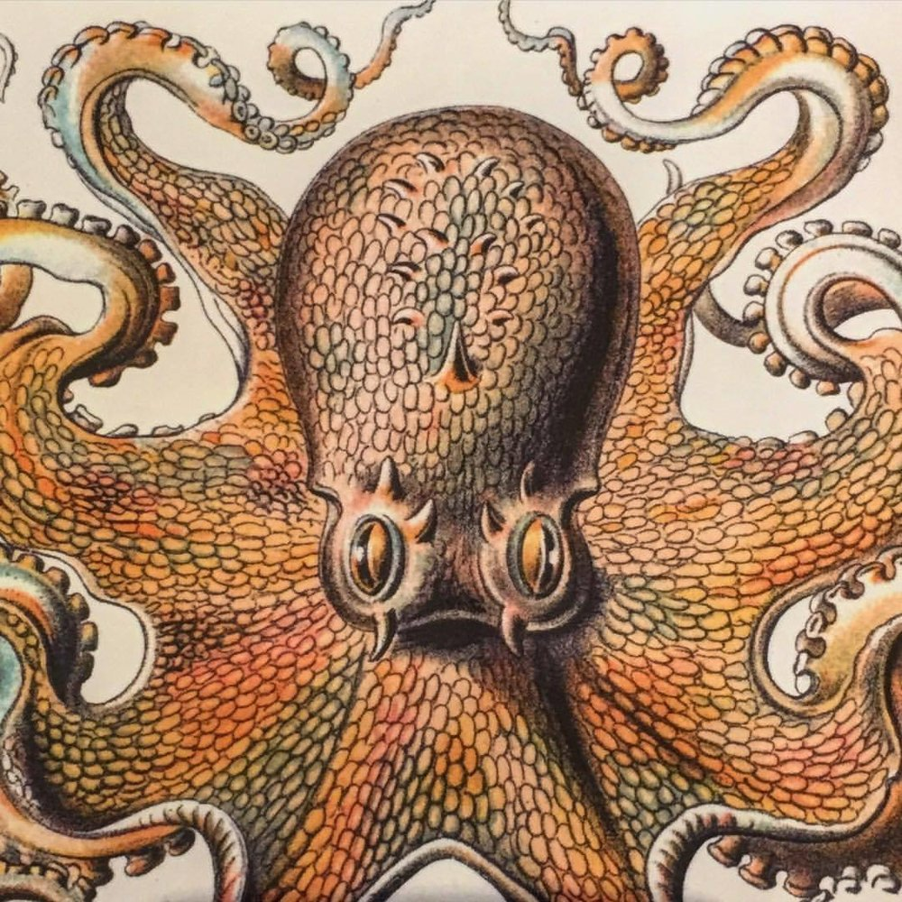 """Other Minds:  The Octopus and the Evolution of Intelligent Life""  by Peter Godfrey-Smith.  #summerreading #books #octopus"